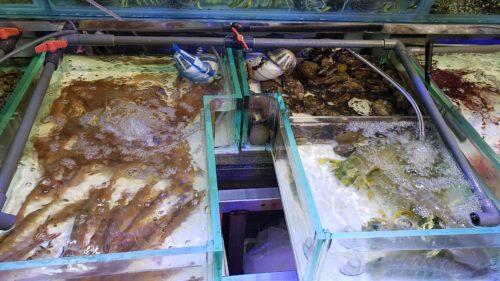 香港海鮮の水槽